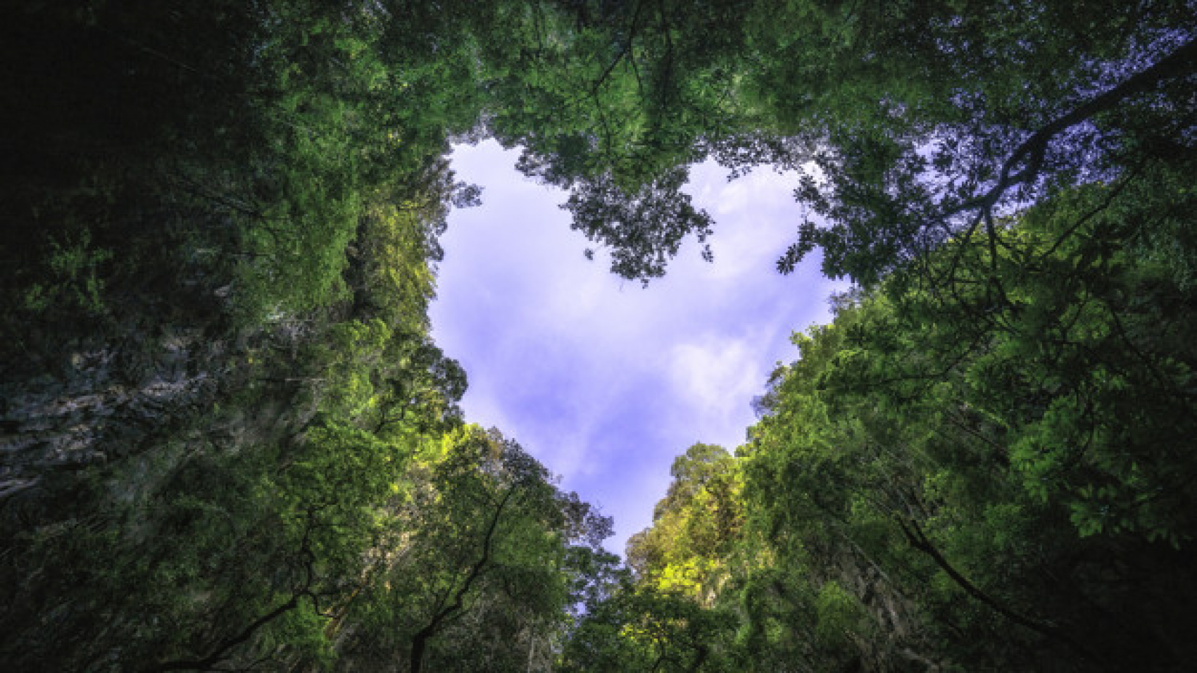 heart-shaped-photography-of-sky-in-the-rain-forest-nature-background_56644-435